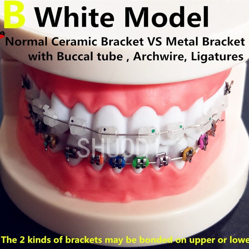 Dental Oral Care Tooth Teeth Model Dental Orthodontic Model for Patient Communication Dentist Study Model