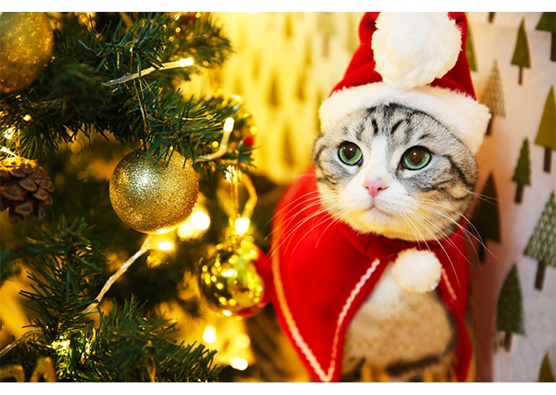 Pet Dog Cat Clothes Christmas Costume Cat Hat Scarf Cloak Dress Up For Kitten Puppy Small Dog Xmas New Year Costume Accessories