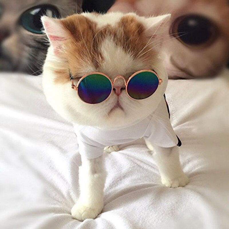 Cute Glasses Small Pet Dogs Cat Glasses Sunglasses Eye-wear Protection